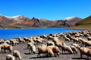 如果我不见了,你会不会来西藏找我