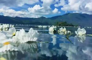 又是一年泸沽湖的水性杨花开,你还在等什么?