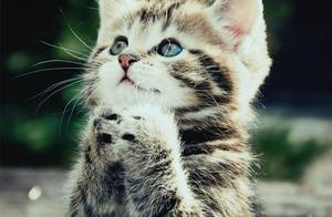 中国小橘猫被误关集装箱运到米兰,猫:快来这里看我!