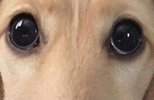 心理测试:第一眼哪一只才是狗眼?测你找对象时,眼光准不准
