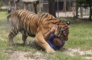 男子在家养了6只老虎和2头狮子,邻居吓到不敢出门!
