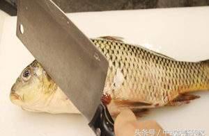 听说:杀鱼时先放一会儿血再处理鱼片,烧出的菜肴会更白更细嫩!