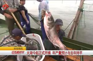 太湖禁渔期结束,渔民们兴高采烈,大鱼一筐一筐往外捞!