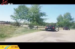 法国野生动物园内游客无视警告下车被猎豹追赶 险遭意外