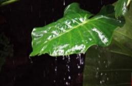 上联:雨打芭蕉 夜,下联: