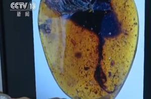 科学家在琥珀中发现古鸟类新物种:生活距今约1亿年
