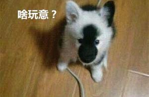 养了只狗狗,却被朋友吐槽长得太奇怪,发到网上闹出了不小的笑话