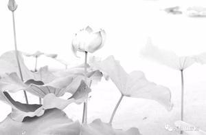 读了故事你能说说为什么莲花开了满世界都是菩萨吗