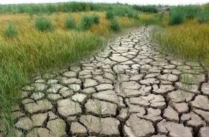 云南干旱来袭!今年花卉产量和品质将受影响,种植户还要预防这种灾害!