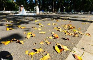 """春种一粒粟的""""粟""""是什么意思秋收万颗子的""""子""""是什么意思整个诗句是什么意思"""