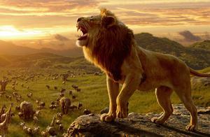 真狮版《狮子王》,口碑扑街!光靠情怀能制霸暑期档吗?