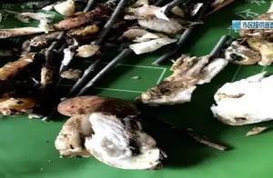 野生菌里有猫腻500克菌插入60颗铁钉,无良商家被查