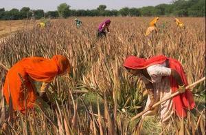 印度女性好可怜之妇女独自外出捡柴,不幸被3名男子田间轮番侵犯