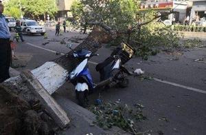 痛心!北京大风已导致4人身亡 其中外卖小哥被大树砸中离世