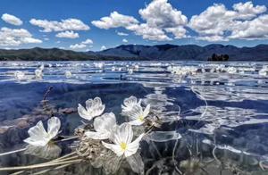 这么美的花,在6月,邂逅最美泸沽湖