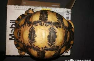石狮:男子网售珍稀陆龟 被警方查获刑拘