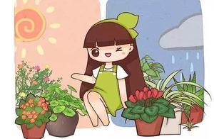 几种适合懒人养的植物,不用管就能长得好, 勤人反而养死