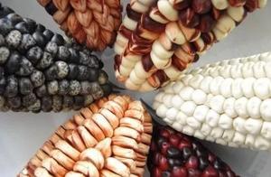 生物多样性乃地球不可或缺之调味品