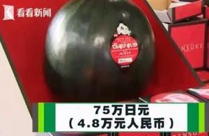 11公斤日本黑西瓜竟然拍出4.8万高价,一举打破世界纪录