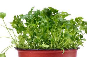 """下次""""生菜根""""留好了,埋土里就长芽,一茬茬吃不用买!"""
