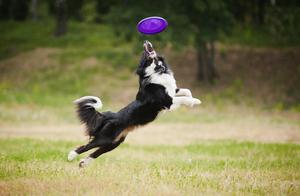 你的狗狗需要运动吗?主人说的不算,得看看它是否有这7个迹象