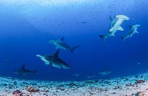 探索南美海洋保护区,潜下水的那一刻,才知道什么叫做海底世界