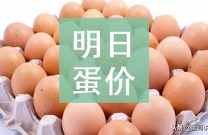 明日(6月25日)鸡蛋价格预测