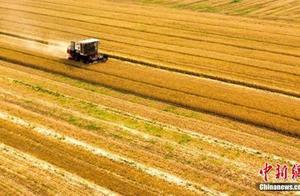 2019年中国夏粮生产获丰收 同比增产293万吨