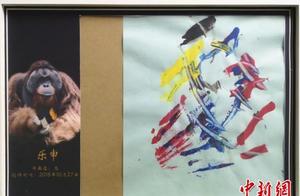 """19岁红猩猩迷上画画 写意画风成动物界""""灵魂画手"""""""