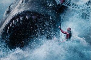 它们被割掉背鳍,扔回大海,等待死亡……