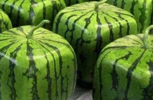 日本种出最贵田助西瓜,破纪录4.2万人民币一个,你觉得值吗?