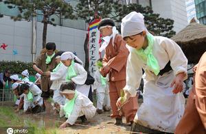 Korea education: Children learns to transplant ric