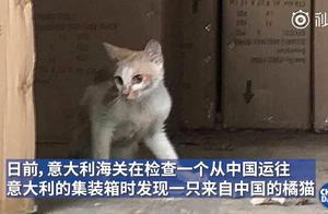弱小可怜又无助 中国小橘猫被误关集装箱运