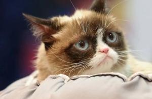 """表情包""""不爽猫""""去世,网友:喵星人只是离开地球,回到喵星了"""