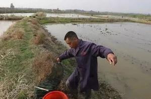 5月下旬,9成小龙虾养殖户都会失误的一点!稍有不慎,病害来敲门