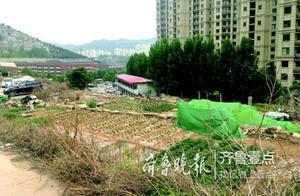 济南一小区旁的菜园越来越大,咋没人管?城管回应了
