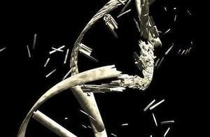 Nature Genetics   内源性DNA双链断裂的元凶——Pol II的停顿与释放
