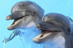 """狗的忠诚是装的,海豚是个""""假笑男孩"""",猪其实很爱干净......我之前可能认识了假动物"""