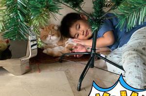 小鱼儿与猫咪玩耍 沙溢:爱和小动物亲密接触