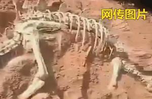 辟谣:网传乐山马边挖出超完整恐龙化石?假的