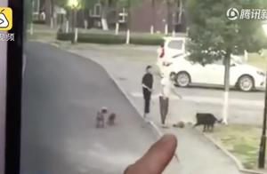 遛狗不牵绳又惹祸!男子遭狗撕咬下体被缝30多针……视频触目惊心