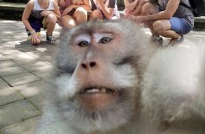澳一家五口打卡巴厘岛网红森林 遇猴子乱入抢C位蹭合影