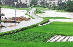 """""""龙舟水""""致惠州2万亩农作物被淹,损失近千万元"""