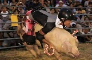 """日本首创""""骑猪比赛"""",举办25年后被取消,当地人:甚是怀念"""