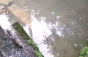 好消息 受到四川长宁地震影响一夜干涸的千年葡萄井又开始蓄水了