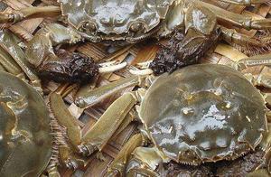 中国来的大闸蟹泛滥,比利时想把它们送回家......