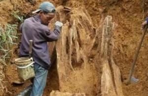 男子挖出巨型异物,当地相关部门立即赶往现场