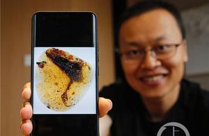 中国古生物学家领衔在琥珀中发现古鸟类新物种
