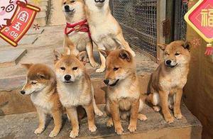 """王珞丹领养""""瓢哥""""《向往3》里的狗狗都有了主人"""