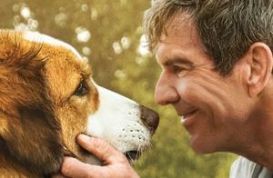 《一条狗的使命2》释放5月催泪弹,疯狂飙泪的经典作品再次回归!